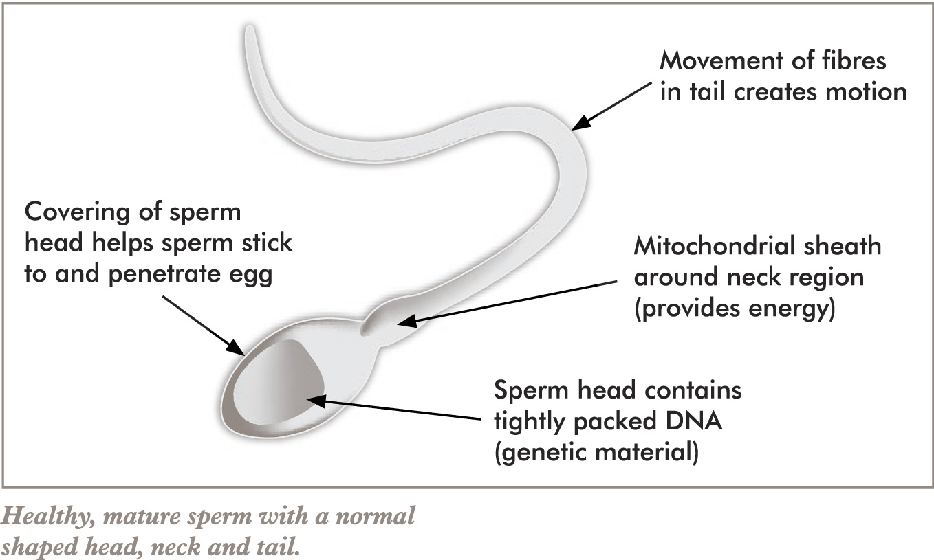 those a sperm have a sex