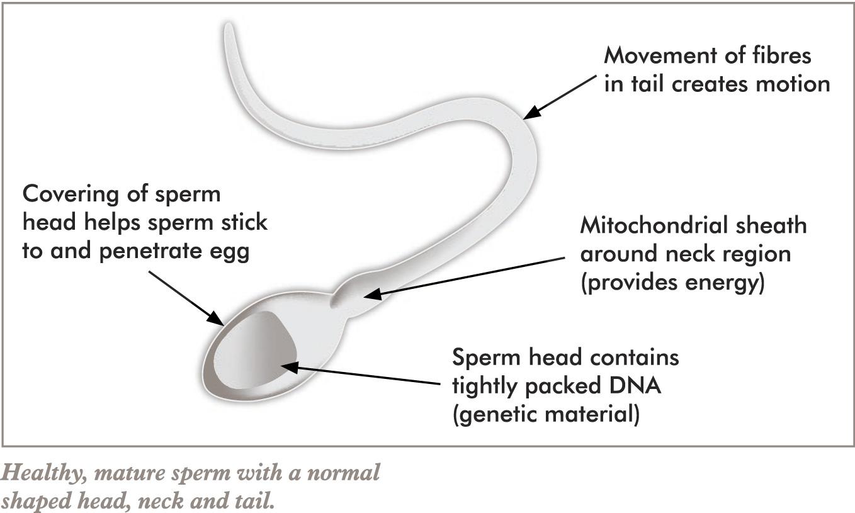 Clitoris pediatric pictures